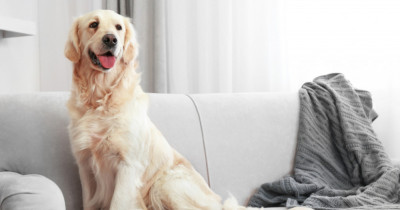 Why your pet might be delaying your house sale